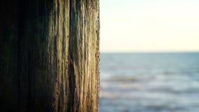 Summer Beach Wood Tree video background stock video footage