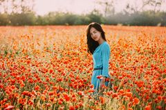 Summer beautiful girl walking in red poppy flower field. Summer beautiful brunette young woman walking through red poppy flower meadow, looking at camera royalty free stock image