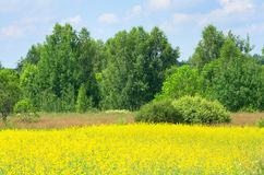 Summer beautiful landscape Stock Image