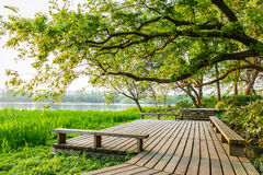 Summer beautiful natural scenery. Wooden walkway and green natural scenery in the summer stock image