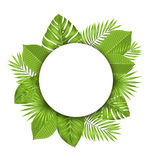 Summer Beautiful Postcard with Green Tropical Leaves for Design Royalty Free Stock Photography