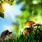 Summer beauty day in the forest Royalty Free Stock Image