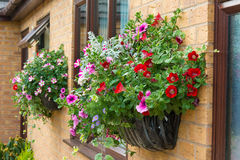 Summer bedding flowers in a wall mounted basket. Royalty Free Stock Images