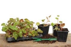 Summer bedding plants stock photo