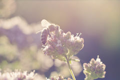 Summer bee Stock Photos