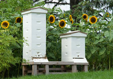 Summer Beehives. Photograph of a pair of beehives in a summer garden stock photos