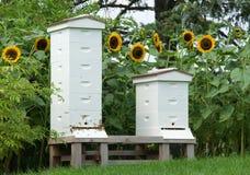 Summer Beehives Stock Photos