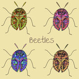 Summer beetles Royalty Free Stock Photo