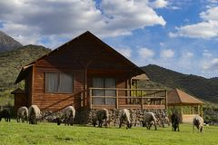 Sheep graze in front of a wooden house royalty free stock photography