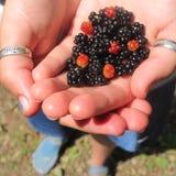 Summer berries. Wild berries found at camp Stock Photo