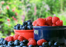 Free Summer Berries Stock Photography - 9934742