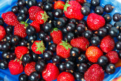 Summer berries black currant, strawberry on blue dish Stock Images