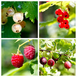 Summer berries collage Stock Photos
