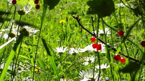 Summer berries and flowers stock footage