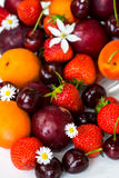 Summer Berries and Fruits cherries, strawberries, plums, apricot Royalty Free Stock Images