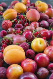 Summer berries and fruits stock image
