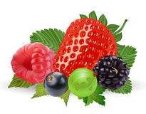 Summer berries isolated on white royalty free illustration