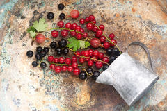 Summer berries on  metal background. Stock Images