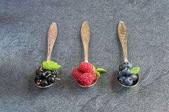 Summer berries in spoons on grey background. Raspberries, currants and blueberries in spoons on grey background. Selective focus royalty free stock photo