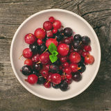 Summer berries in white bowl Royalty Free Stock Photo