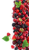 Summer berry Royalty Free Stock Photo