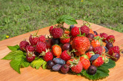 Summer berry collection Stock Image