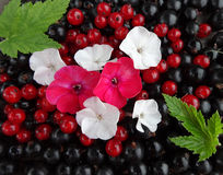 Summer berry floral arrangement of red berries and black currant. Summer composition of red berries and black currant, flowers of the Phlox and leaves Stock Photos