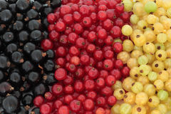 Summer Berry Fruit Royalty Free Stock Photo