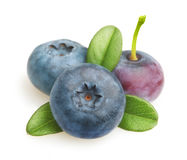 Summer berry fruit. Royalty Free Stock Photo