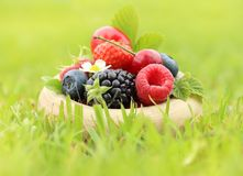 Summer berry fruits Stock Images