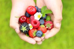 Summer berry fruits Royalty Free Stock Image