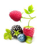 Summer berry fruits isolated. Summer berry fruits. Berries. Raspberry, Blueberry, Blackberry Isolated on White Background Royalty Free Stock Image