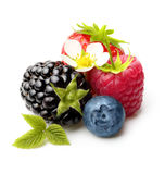 Summer Berry Fruits Isolated Royalty Free Stock Image