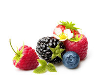 Summer Berry Fruits Isolated Royalty Free Stock Photos