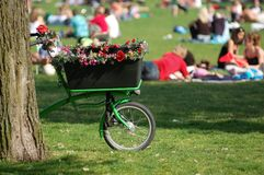 Summer bike in the park in Amsterdam. Bicycle decorated with flowers with a crowd in the background on a meadow in Oosterpark Stock Image