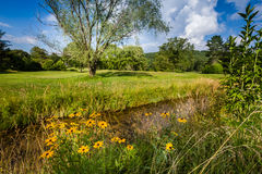 Summer black eyed susans, creek and green meadow Stock Images