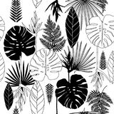 Summer black and white tropical palm tree leaves seamless patter Stock Photography