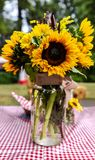 Summer Bloom royalty free stock images