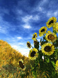 Summer blooming. 3d render of a group of sunflowers in a sunny day Royalty Free Stock Photos