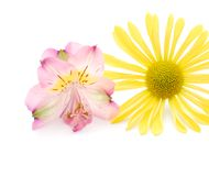 Summer blooms. A couple summer bloom for background Royalty Free Stock Photo