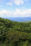 Summer Blooms in the Mountains. View of the North Carolina mountains from Craggy Gardens overlook in the summertime royalty free stock photography