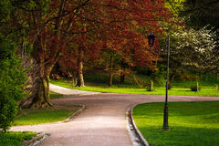 Summer blossoming city park with beautiful tree Stock Photography