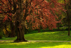 Summer blossoming city park with beautiful tree Royalty Free Stock Photos