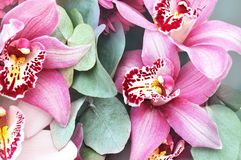 Summer blossoming delicate orchids, blooming tropical flowers shiny colorful festive background, bright and soft floral card stock photos