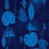 Summer blue tropical palm tree leaves seamless pattern Stock Images