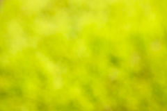 Summer blurred background of green and yellow colors Stock Photos