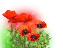 Summer blurred background Stock Image