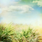 Summer blurred nature background with grass and sky Stock Photos