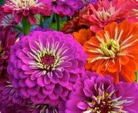 Summer Bouquet stock images
