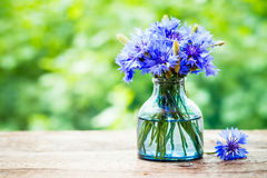 Summer bouquet of blue cornflower outdoors Royalty Free Stock Image